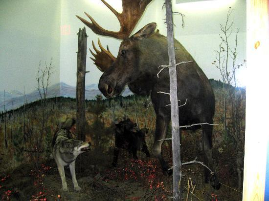 Moose with Wolves - Northern Wildlife Museum, Teslin