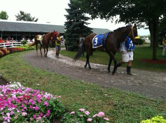 Fort Erie Race Track: Horses in the paddock prior to a race