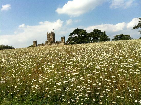 Highclere Castle: Flower meadow