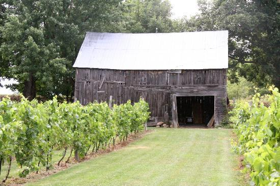 Howe Island B&B: Barn & vineyard