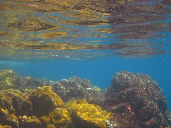 Baia do Sancho: Colourful underwater