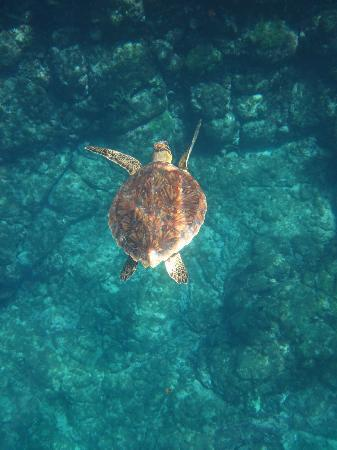 Baia do Sancho: turtles!