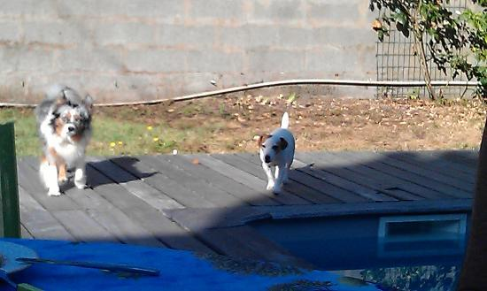 Clos des Boulevards : Broken boards around pool, neglected lawn & 2 of 3 dogs