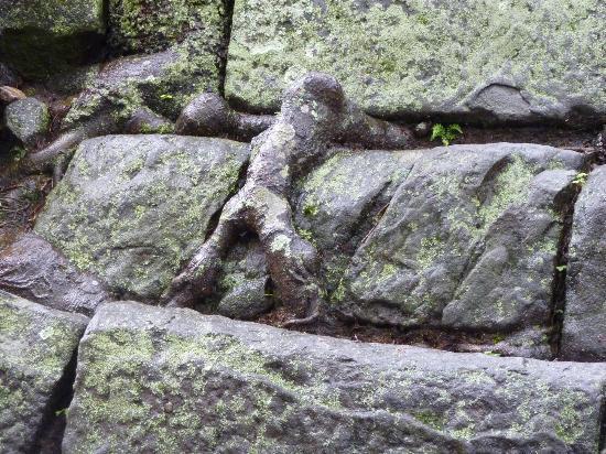 Wakayama, Giappone: 石垣をよじのぼる人がどこかに!