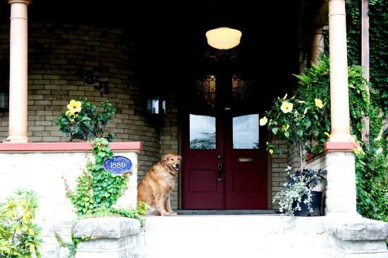 """Park Place Bed & Breakfast: Brandy, the """"guard dog"""" """