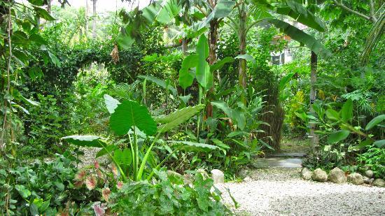 Hotel Meli Melo: Un échantillon du jardin attenant à la cuisine extérieure.