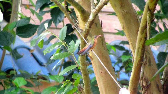 Hotel Meli Melo: Un colibri sur notre corde à linge dans le jardin privé attenant à notre chambre.