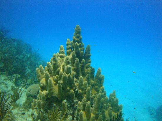 Sharky Dive Shop: Buceo Sharky Dive
