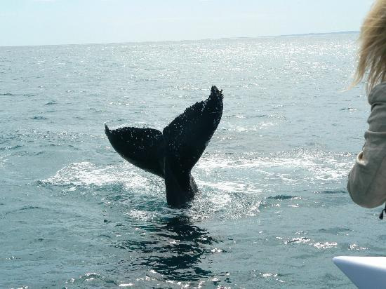 Freedom Whale Watch: Tail Fin