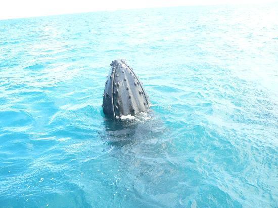 Freedom Whale Watch: Spy Hop