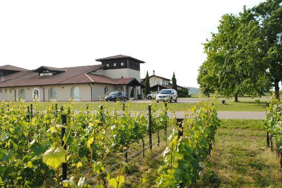 Mariano del Friuli, Italy: La cantina