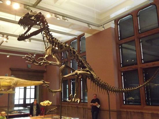 Dinsoaur Skeleton at Kelvingrove Art Gallery and Museum, Glasgow