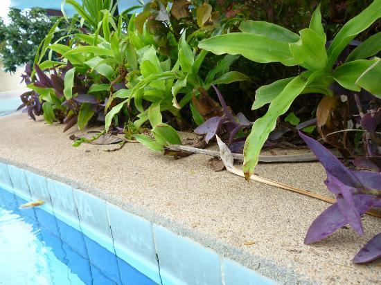 Jomtien Garden Hotel & Resort: Pool flora