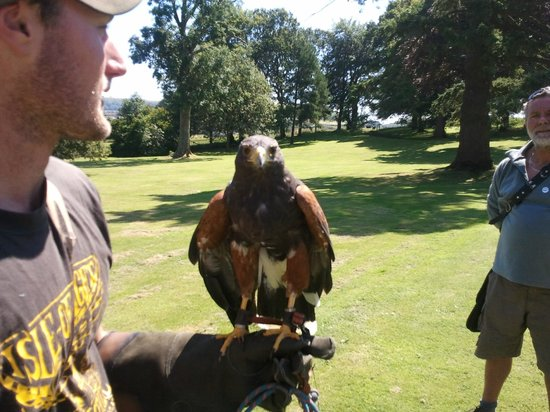Appuldurcombe Farm: One of the trainers holding a Gyr Hawk.