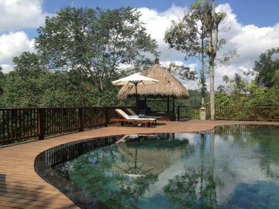 Nandini Jungle Resort & Spa: Pool side