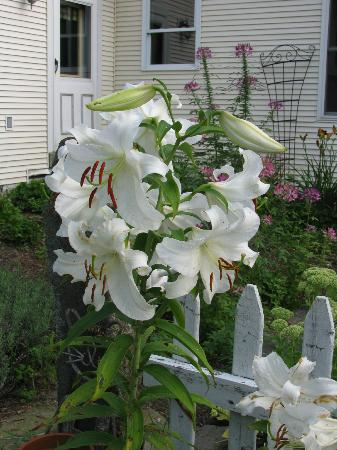 Antiqued Inn Time B&B: Heavenly scented gardens