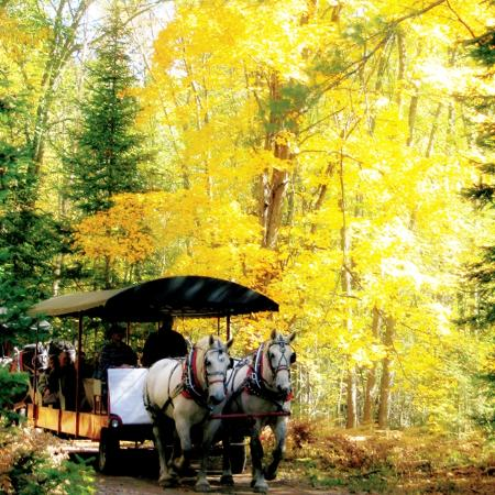 Thunder Bay Resort: Golden Corrall Fall Colors