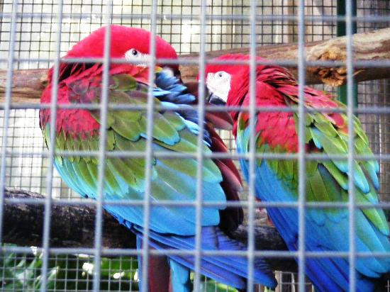 Ashmore Palms Holiday Village: gorgeous birds