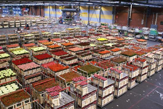 Royal FloraHolland: A neat place to see.