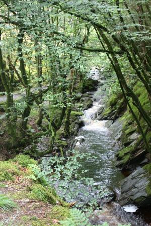 Hafod Uchtryd: Hafod - Lady's Trail 1