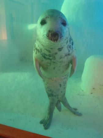 Aquarium de Biarritz: Aquarium