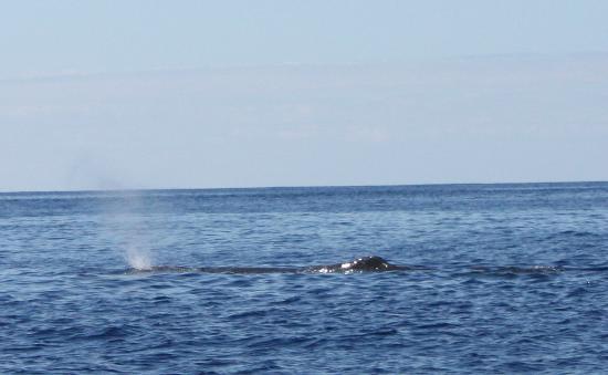 Espaco Talassa - Day Tours: whales