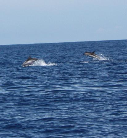 Lajes do Pico, Portugal: dolphins