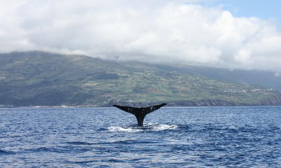 Lajes do Pico, Portugalia: whale tail
