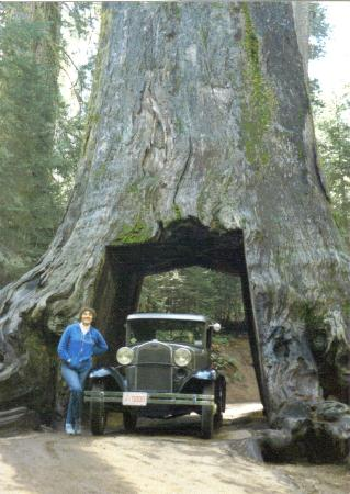 Nearby are redwood trees big enough to drive through for Cabine eureka ca