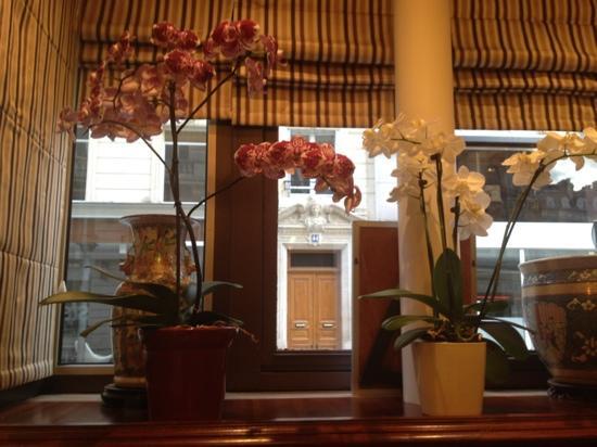 Hotel Bellevue: orchids in reception