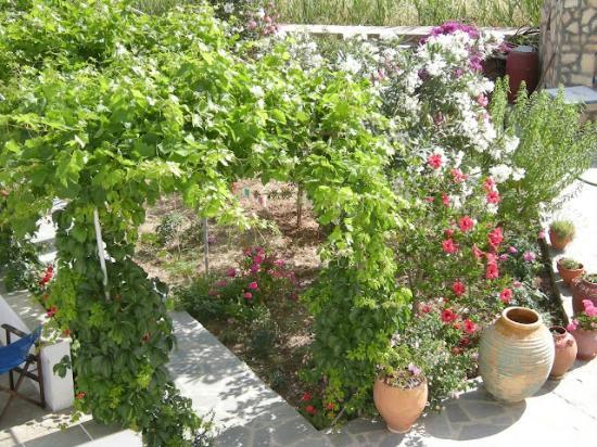 Hotel Afroditi : Giardino Fiorito