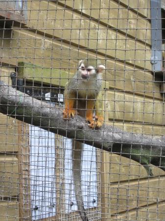 Parc des Mamelles, le Zoo de Guadeloupe: Small monkey