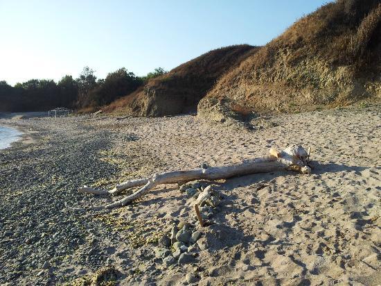 """Hotel Romance : Eternal beachgoer - natural """"sculpture"""" made by Ramance' owner"""