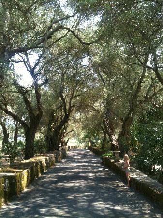Pelecas Country Club: Oprijlaan met hele oude olijfbomen...