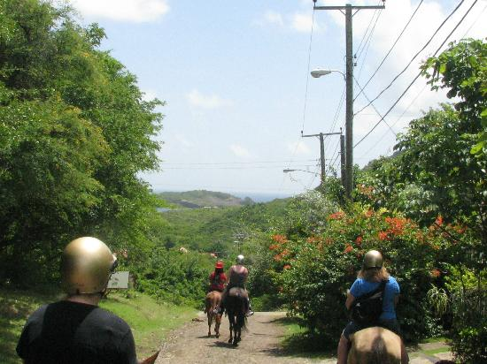 Holiday Riding Stable: Along the trail