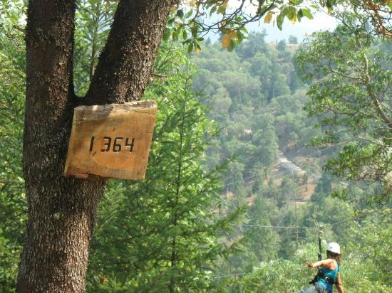 Rogue Valley ZipLine Adventure: Taking off at the last and longest of the ziplines.