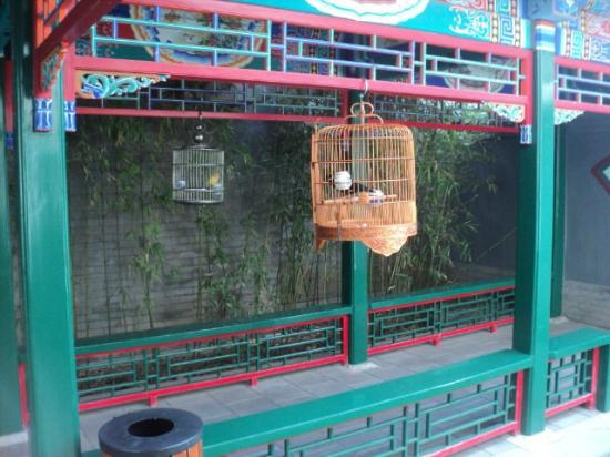 Soluxe Sunshine Courtyard Hotel: Bird cages on covered walkway