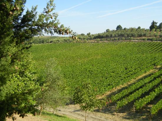 Tenuta Mormoraia: Mormoraia vineyards