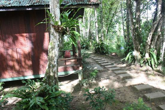 Nature Lodge Kinabatangan: The chalet