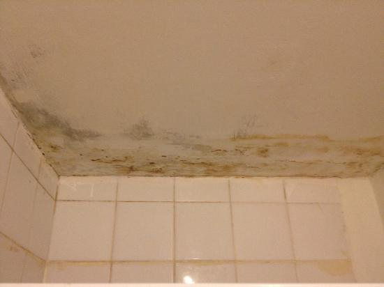 37 Collingham Place London: Moldy ceiling in the bathroom
