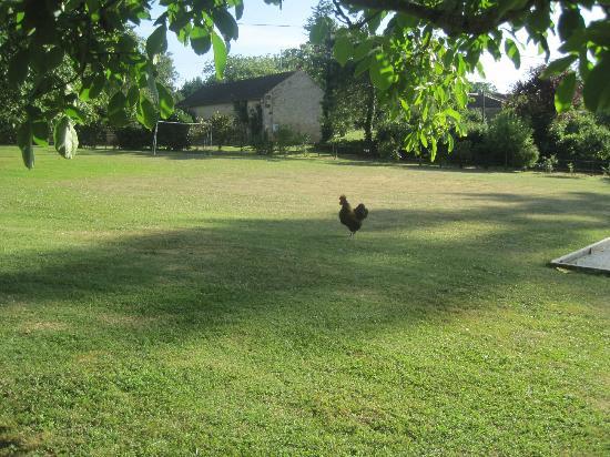 Le Chevrefeuille: Grote tuin met kippen en cavia's.