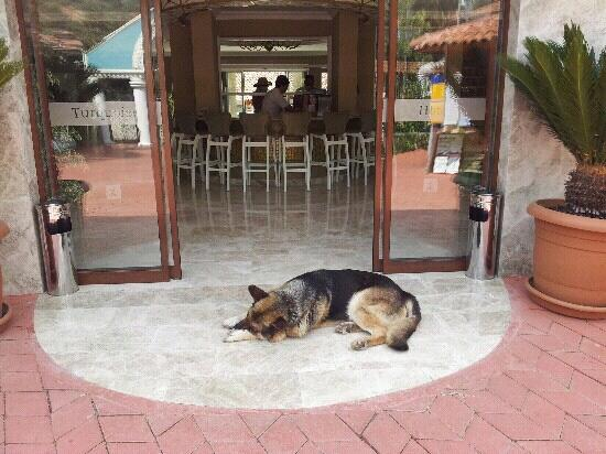Turquoise Hotel: not quite a guard dog haha lovely dog xxx