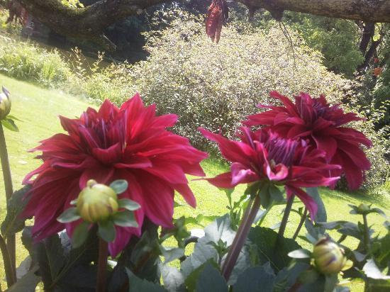 Flora: fiori