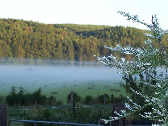 Solstice Farm B & B: A misty morning