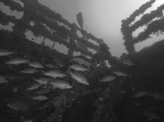 Spiegel Grove: School of fishes