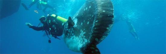 Mega Dive Bali Photo