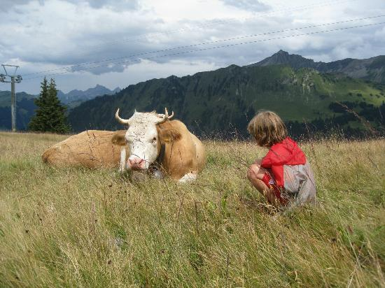 Posthotel  Roessli: A friendly Swiss cow - hike from the hotel