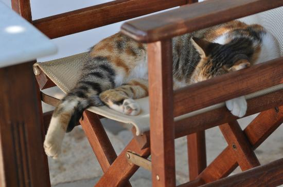 Kavos Boutique Hotel Naxos: We aren't the only ones to enjoy the terrace!