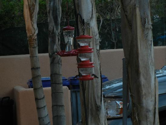 The Coyote Inn: Hummingbird feeders