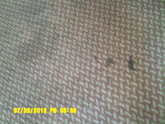 Days Inn - ST. Louis/Westport MO: Room Carpeting--how nice--and we paid for this